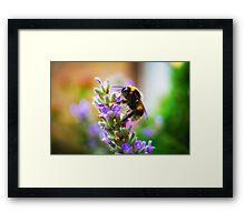 Humble Bumblebee Framed Print
