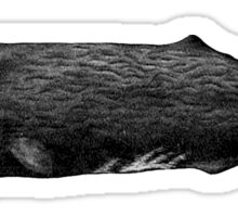 Sperm whale Sticker