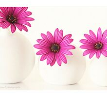 Pink Cape Daisies. by Alyson Fennell