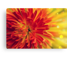 orange-red flower Canvas Print