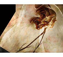 Rose Petals Photographic Print