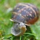 Snail take your time by Declan Carr