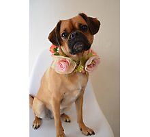 Pug x Cavalier Dog with Flower Garland Photographic Print
