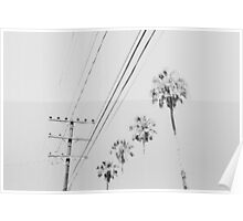 Palms and Wires Poster