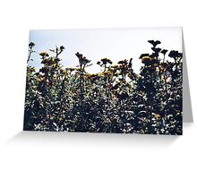 San Francisco Flowers Greeting Card