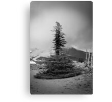 Melted Tree Canvas Print