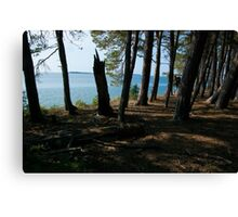 Grand Island Woods Canvas Print