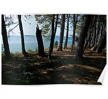 Grand Island Woods Poster
