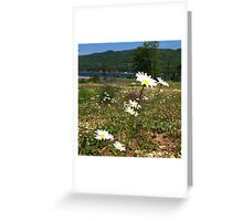 Cape Breton wildflowers Greeting Card