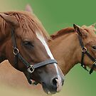 The Bond Between Mare and Foal by Declan Carr