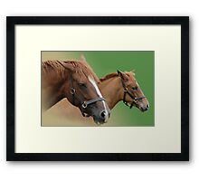 The Bond Between Mare and Foal Framed Print