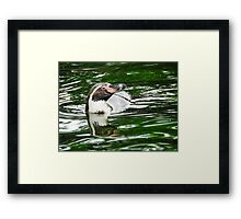 Penguin in emerald water Framed Print