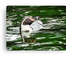 Penguin in emerald water Canvas Print
