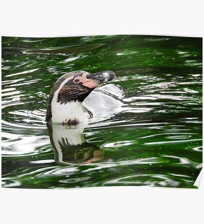 Penguin in emerald water Poster