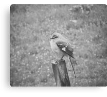 The Bird Black and White Canvas Print