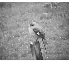 The Bird Black and White Photographic Print