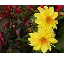 YELLOW DELIGHT Photographic Print