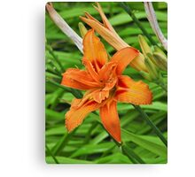 Lilly flower Canvas Print