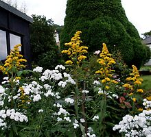 Golden rod and bachelor's buttons by missmoneypenny