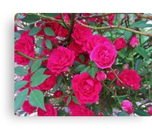 Standard Rose Canvas Print