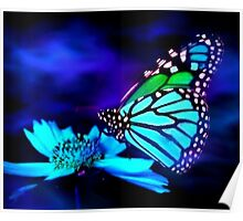 Butterfly in Blue Light Poster