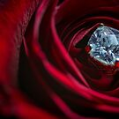 Diamond in the Rose by Randy Turnbow