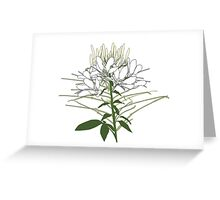 Heart my Cleome Greeting Card