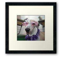 Canine Diva Framed Print
