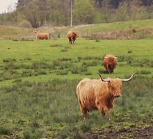 Hairy cows by haroula