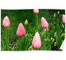 Raindrops on Tulips      ^ Poster