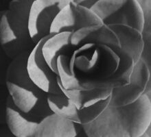 Black and White Camelia with Shadow Sticker