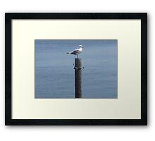 Cape Cod Gull Framed Print