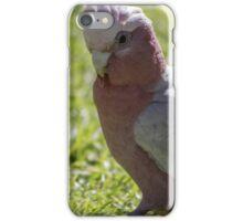 Galah Strutting iPhone Case/Skin