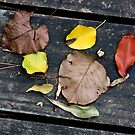 Mid-summer Fall by Otto Danby II