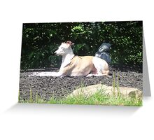 Canine Karma Greeting Card