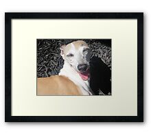 The Gigglin' Greyhound Framed Print