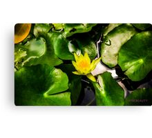 Scene from a Miami pond Canvas Print