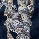 Animal Skins: Swell Shark by Jedro