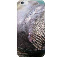 Walrus Visiting iPhone Case/Skin