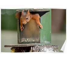 Playfull Squirrel Poster