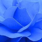 A blue rose © by JUSTART