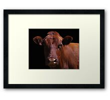Cow Out Of The Dark Framed Print