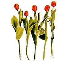 Five Tulips Photographic Print