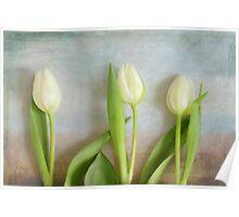 Tulips - JUSTART ©  Poster