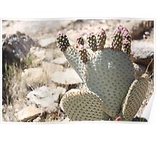 Cactus and Buds Poster