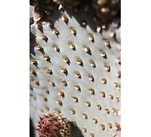 Prickly Pear Cactus Landscape Photographic Print