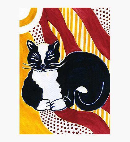 Content Tuxedo Cat Photographic Print
