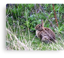 Eastern Cottontail in the Brush Canvas Print