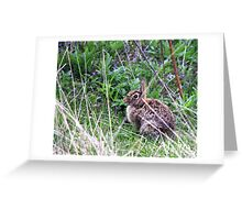 Eastern Cottontail in the Brush Greeting Card