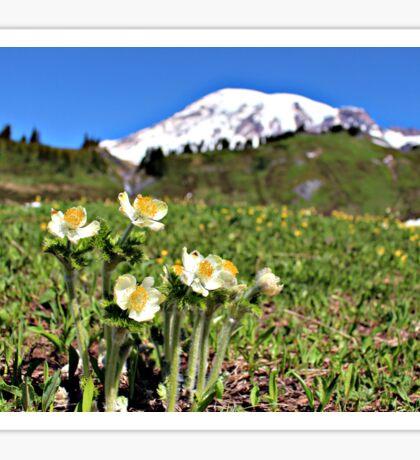 Mountain Pasqueflowers - Mount Rainier Sticker